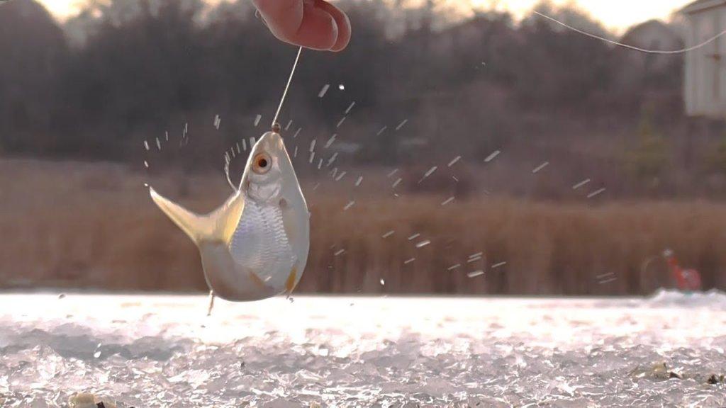 Ловля плотвы зимой на мормышку. Зимняя рыбалка 2021.
