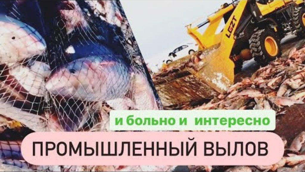 Промышленный вылов рыбы. Заготовка рыбы - процесс