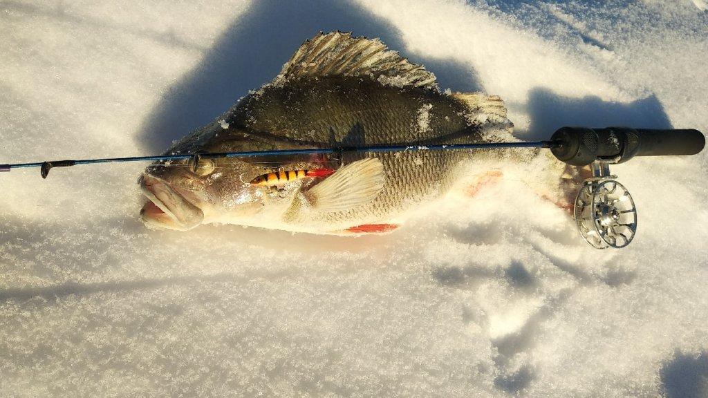 Зимняя рыбалка на балансир 2021, трофейные окуни