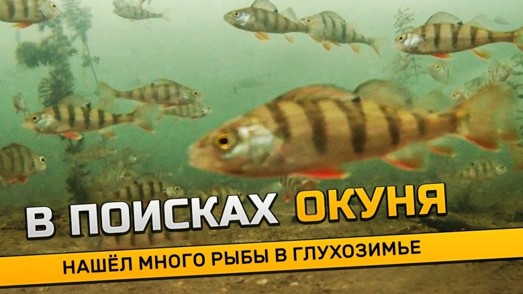 Поиск окуня в глухозимье! Реакция рыбы на камеру. Подводная съемка, узнал где раки зимуют...