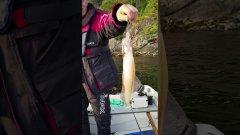 кальмар, рыба или животное # Shorts