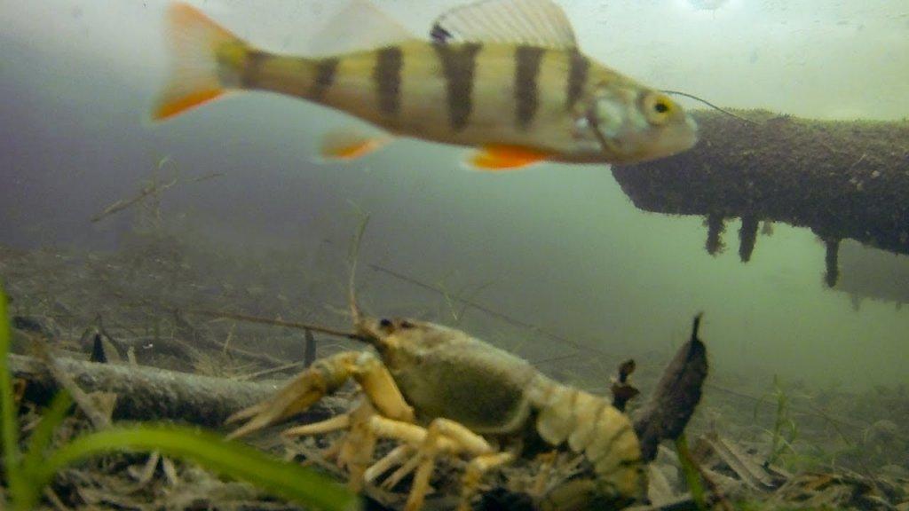 Где раки зимуют?! Огромная гора раков! Моменты поклёвки и реакция рыбы на мормышку. Подводные съёмки