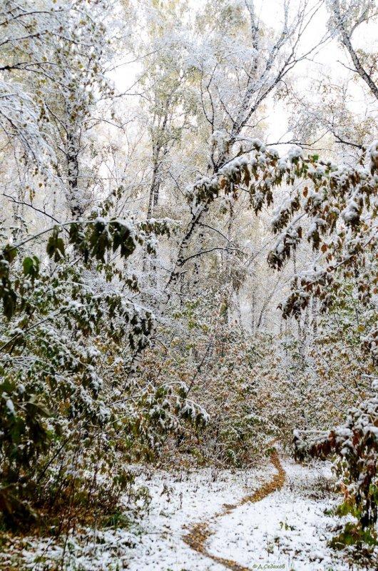 Осенние тропки.
