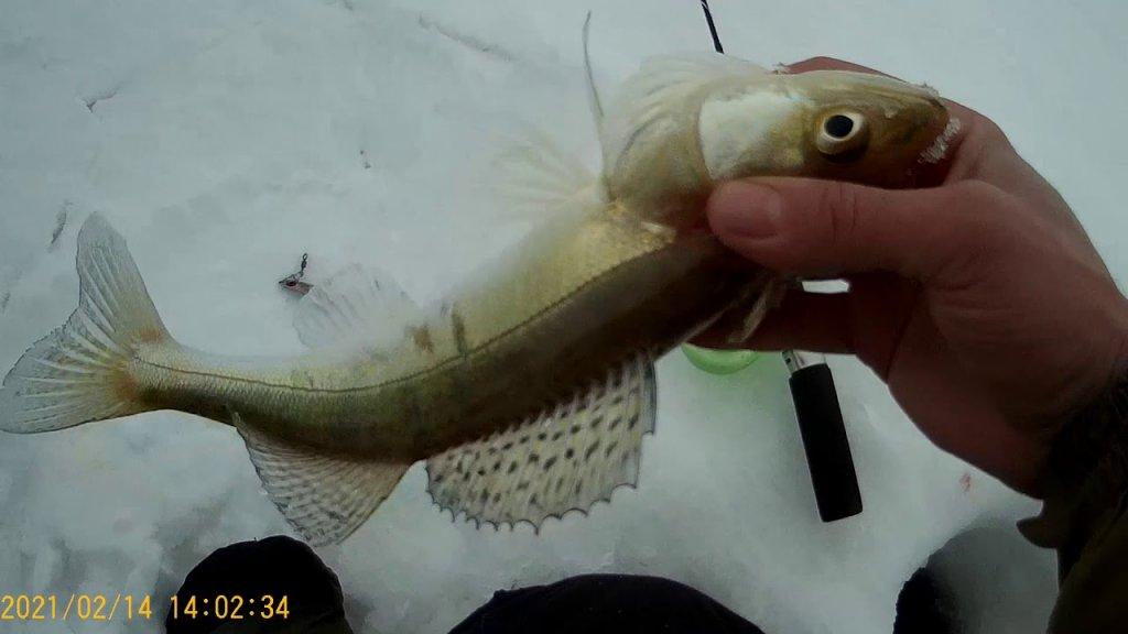 Рыбалка на Судака на ОВХ 31км