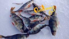 Ловля окуня в глухозимье на блесну, рыбалка в марте