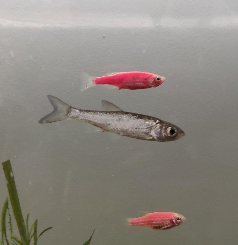 Что за рыба?