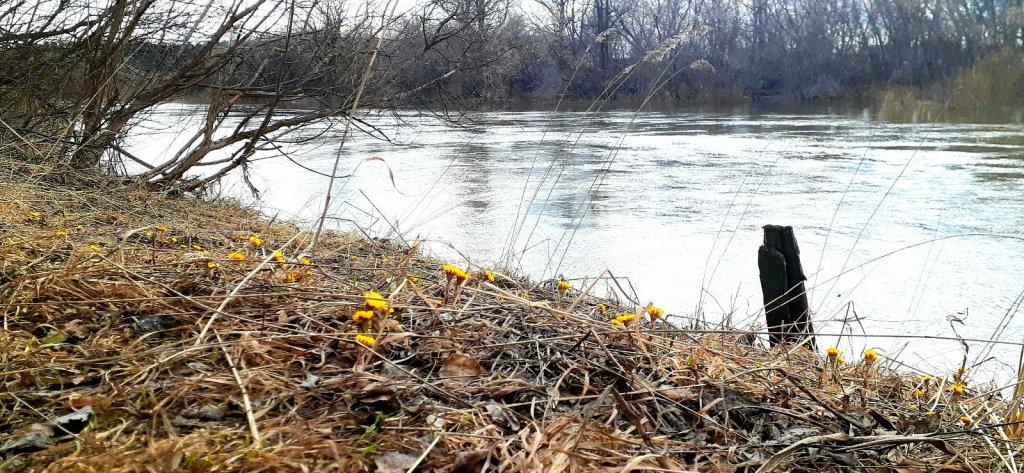 Весенняя река Иня....