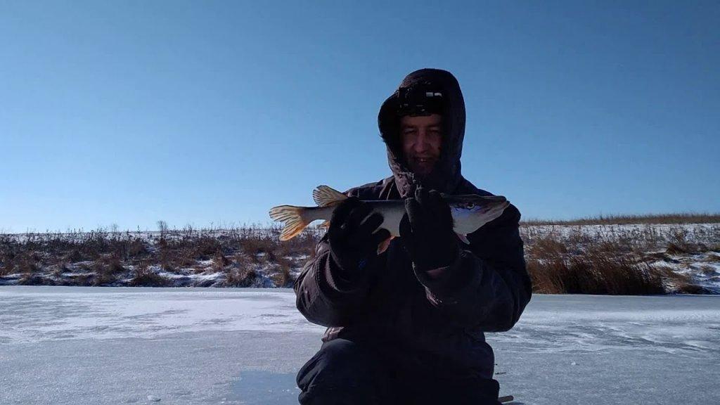 Голодные щуки глотают блесны. Ловля щуки на блесну по последнему льду.