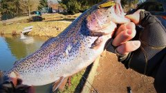 Короткий выезд на домашний водоём. Trout area.форелевая рыбалка.