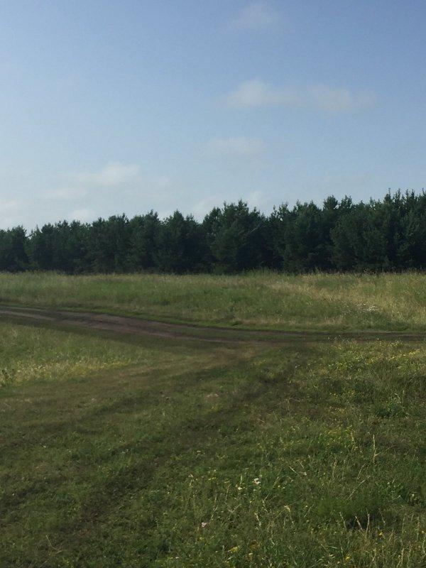 Лес вокруг озера Степное