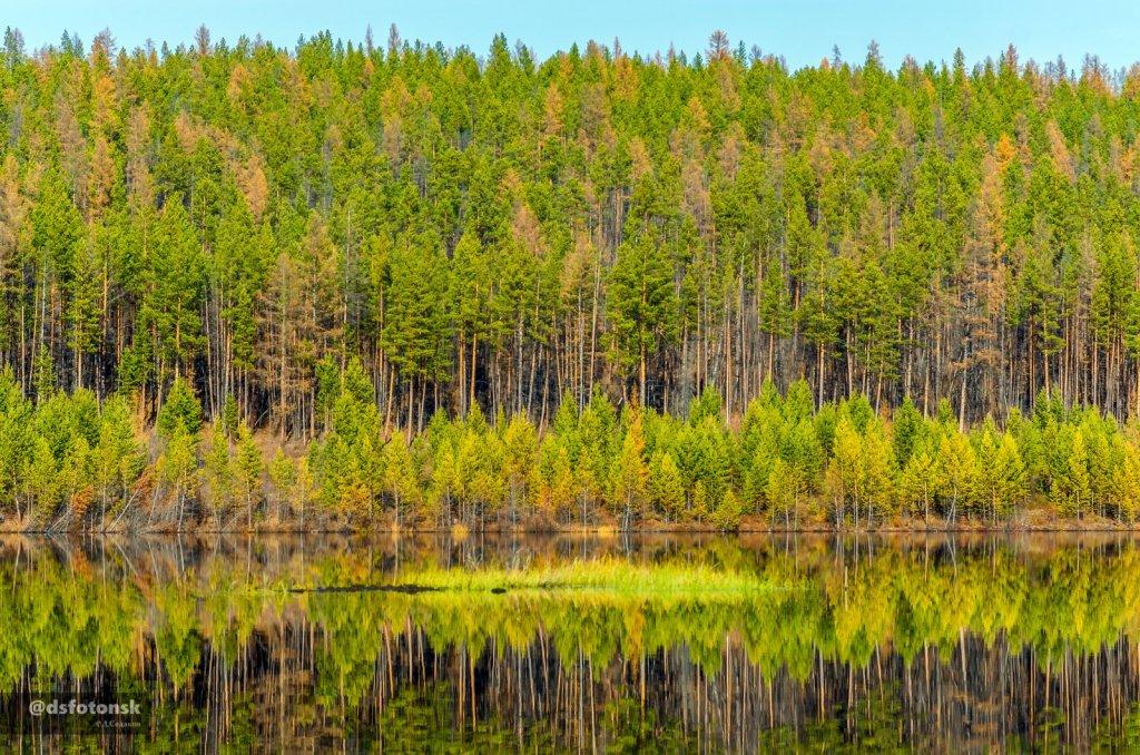 Деревья тайги отражаются в реке ярким осенним днём.