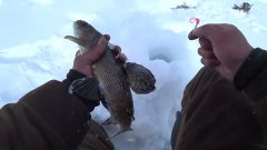 Таёжная жизнь. Рыбалка и приключения в Сибири.