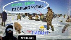 Последний лед начался!!!! Залетаем на весенние хапки! Рыба в шоке от количества рыбаков!!!!