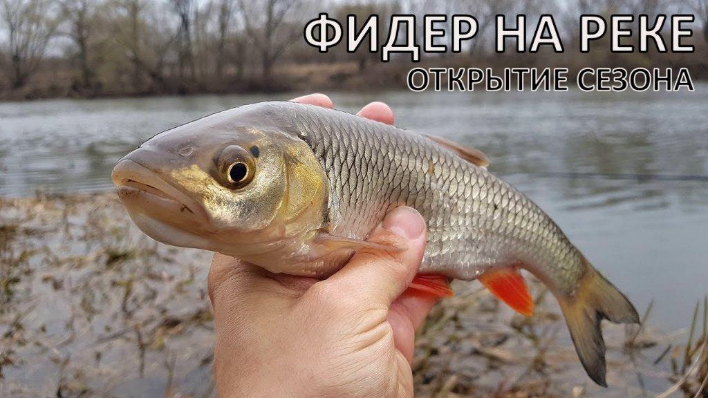 Рыбалка на фидер в дождь   открытие сезона на реке