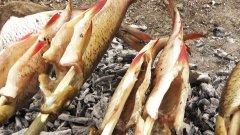 Рыба на углях