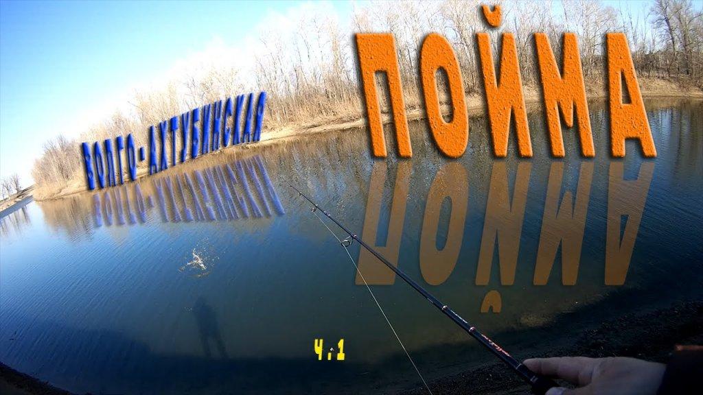 Волго-ахтубинская пойма в 30-70 км от Волгограда.  На какой улов можно рассчитывать?