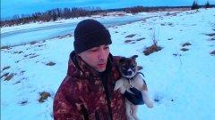 Будущая охотница! Взял собаку для охоты. Западно-сибирская лайка. Жизнь в деревне. Коми республика.
