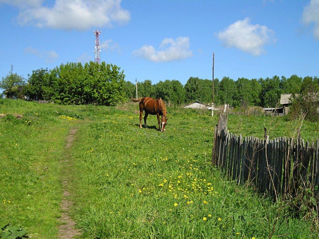 Десять лет назад и трава зеленее была... И кони были...