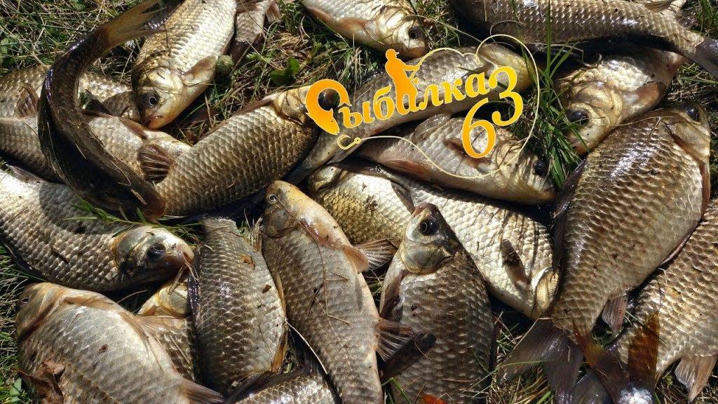 Рыбалка на удочку как в детстве, ловля весеннего карася на поплавочную удочку
