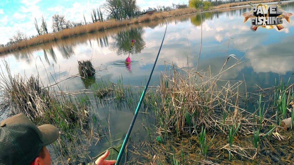 Крупный карась на удочку/ рыбалка 2021 весна/ дикий водоем умеет удивить.