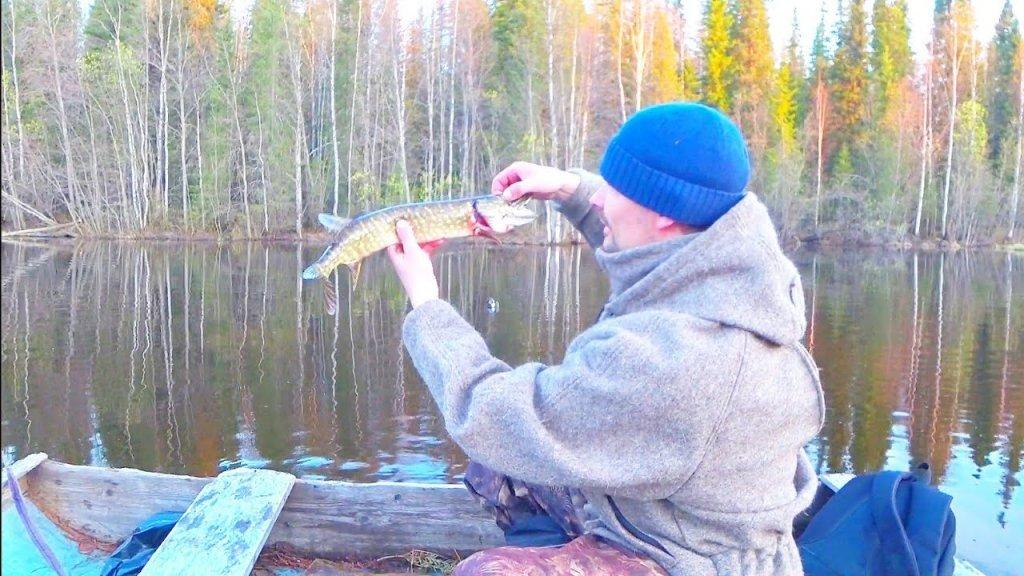 В этом лягушатнике есть щука / рыбалка сетями на лесном озере. Поймал рыбу на уху. Республика коми.
