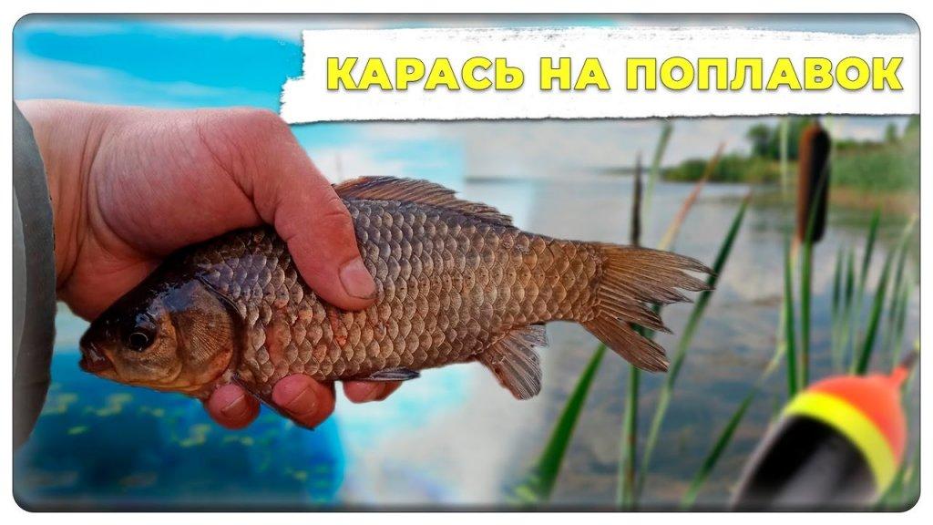 Карась на поплавок |Рыбалка на Карася|Рыбалка на протоке Волги весной 2021.