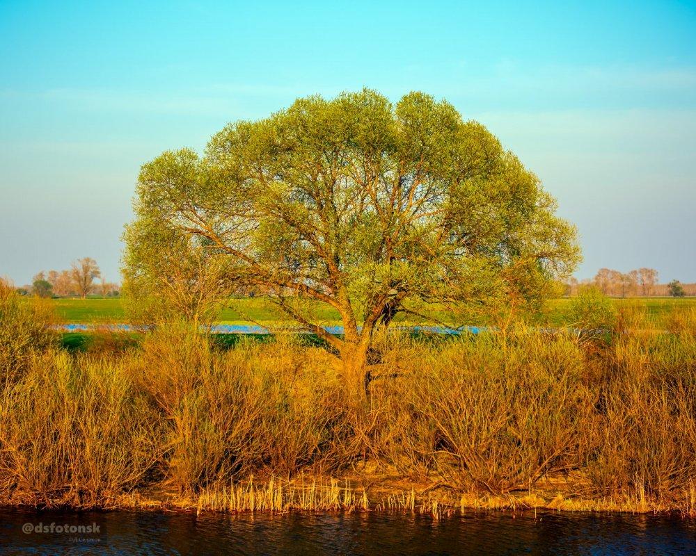 Между озерем и речкой. Озеро Свинячье за берегами реки Карасука.