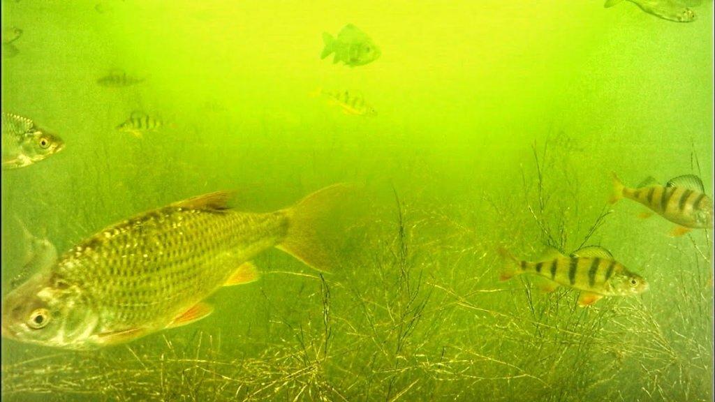 Рыбье эльдорадо начинается, подводная съемка, часть 1