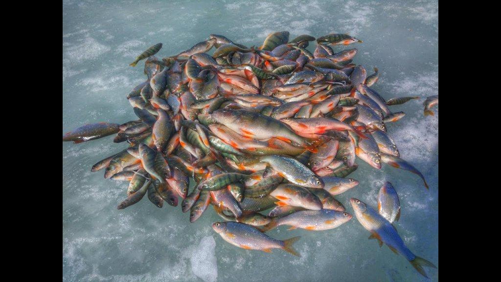 Бешенный клев плотвы, рыбалка на Яркуле весной, часть 2