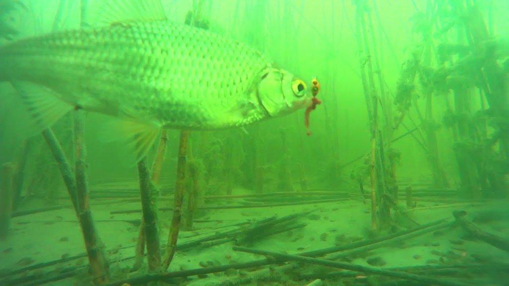 Чаны апрель рыбалка подводная съемка