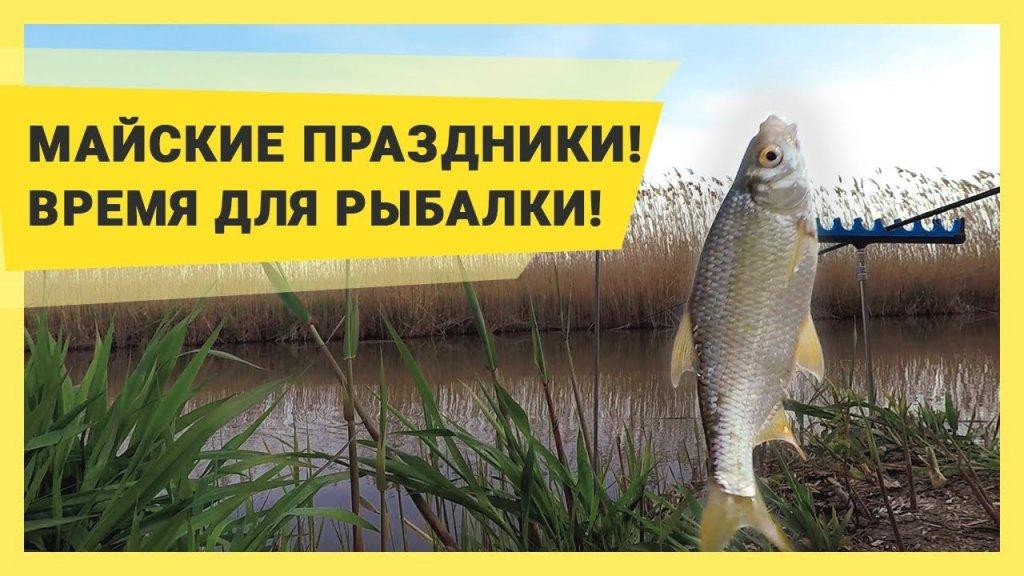 Рыбалка в Краснодарском крае: ЮМС, Шапарской, 28 канал. Улов: красноперки, таранки, окуни.