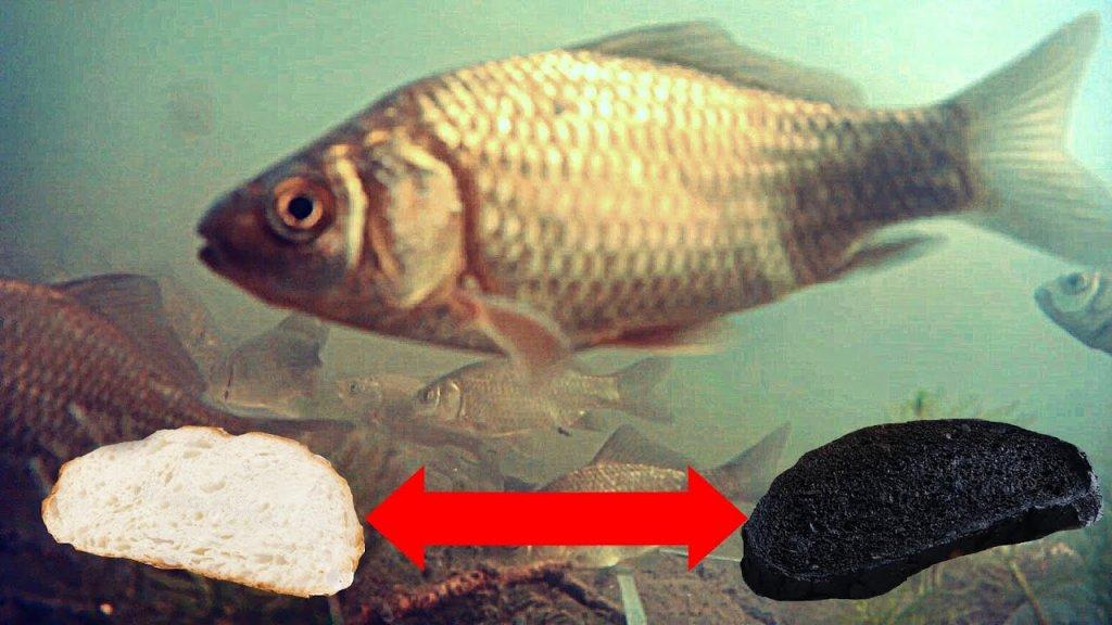 Обычный Батон или ЖЖЕНЫЙ??? Реакция рыбы! Подводная съемка