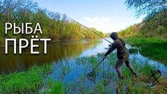 Рыбалка на реке в диких местах! Ловим разную рыбу на фидер или донку!