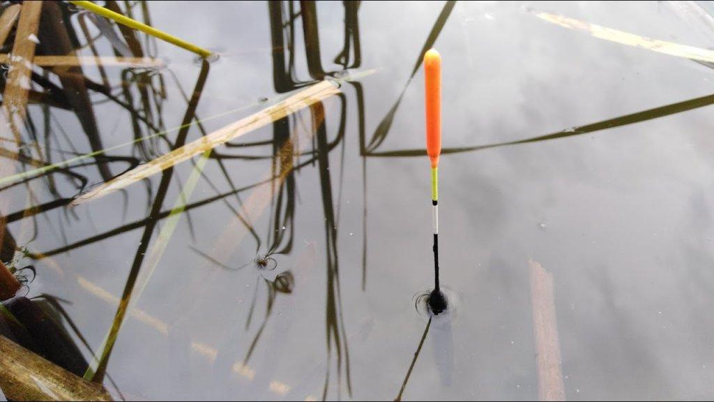 Интересные поклёвки карася и другой рыбы