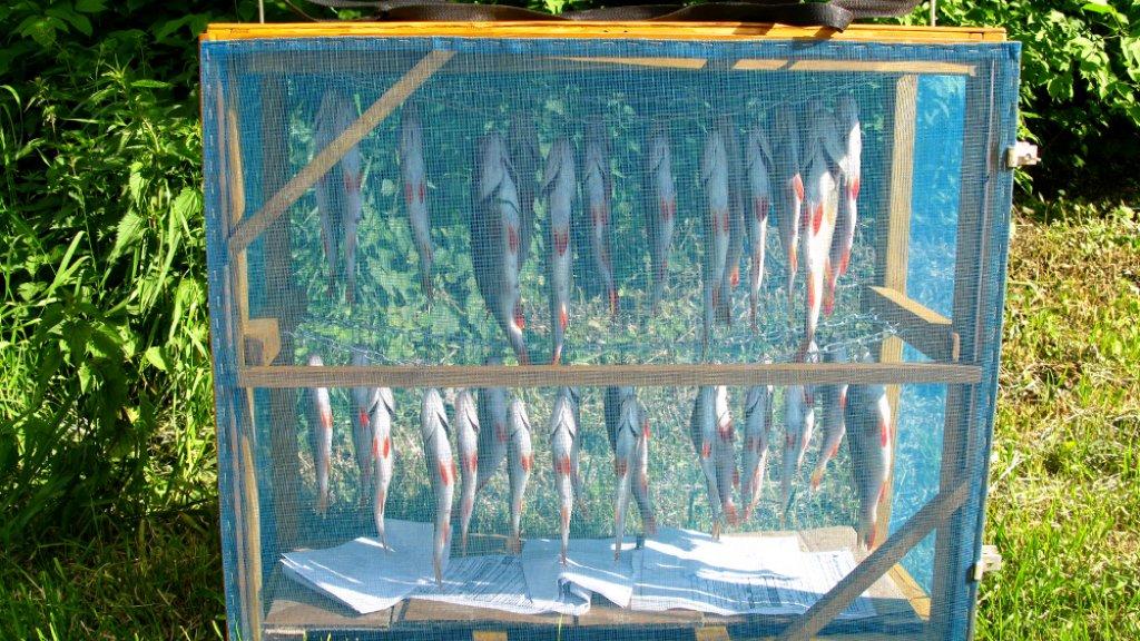 Дегидратор своими руками, или сушилка для рыбы обыкновенная