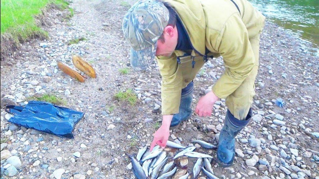Бомбезная рыбалка на кораблик!!! Поймали 20 хариусов. Республика коми. Река пижма. Тайга коми.