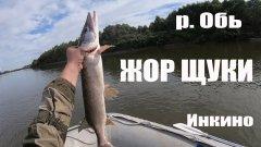Рыбалка на реке Обь | Нереальный клев щуки и судака | Рыбалка в Инкино