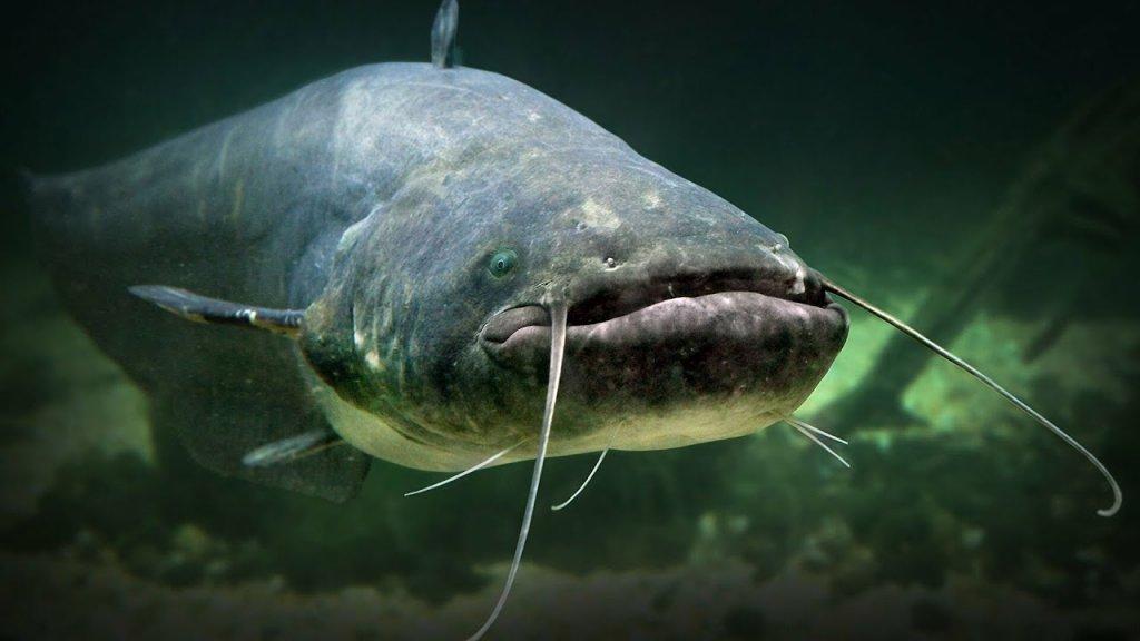 рыбалка сом 18 06 2021