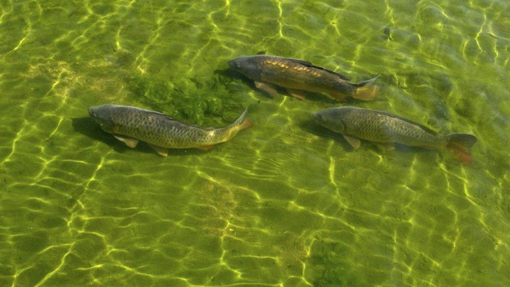 Болото полное рыбы