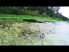 Рыбалка в заболоченных местах. Фильм.