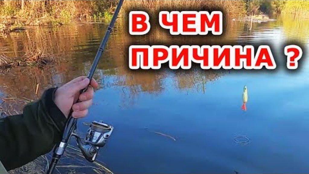 Место, руки или приманка виновата, как считаете? Рыбалка на спиннинг с берега
