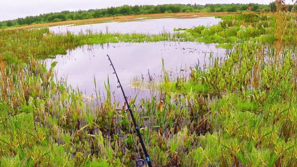 Вот это рыбалка ! В этом болоте полно рыбы !!!