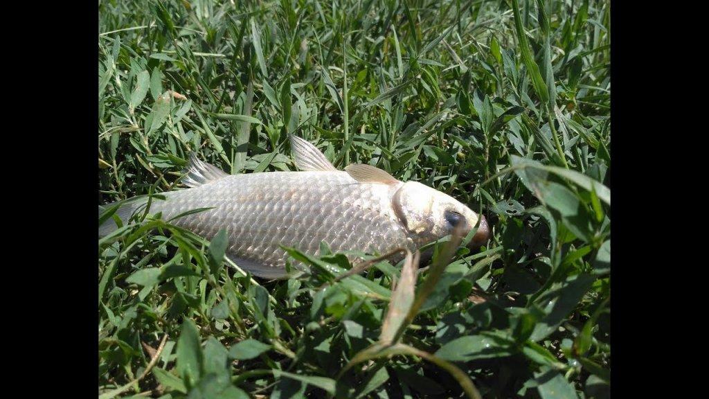 5 мягких насадок сделали всю рыбалку. Ловля карася в на фидер и донки