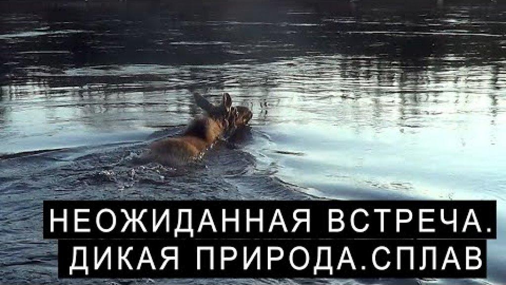 Олень через реку. Рыбачить или снимать видео