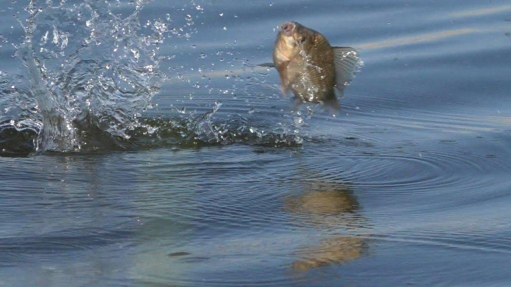 Экспедиция на карася. Сеть озер краснозерки. Как искать клещей? Соленое озеро - рапа и другое.