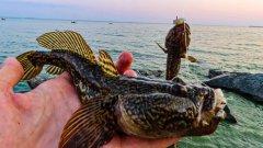 Снасть на кнута (большого бычка) / морская рыбалка на спиннинг с берега