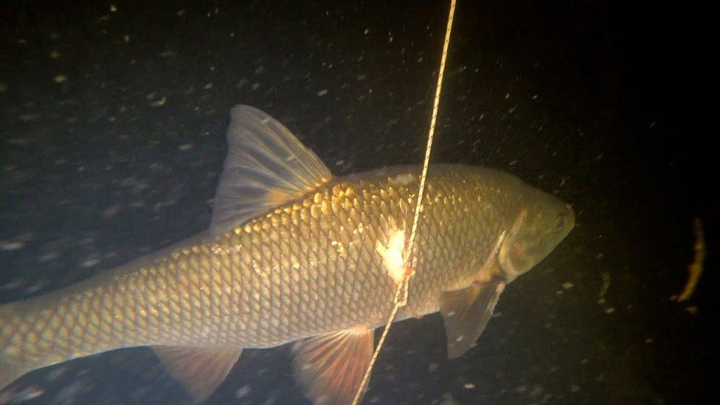Особенности подводной охоты! Вот она рыба моей мечты!