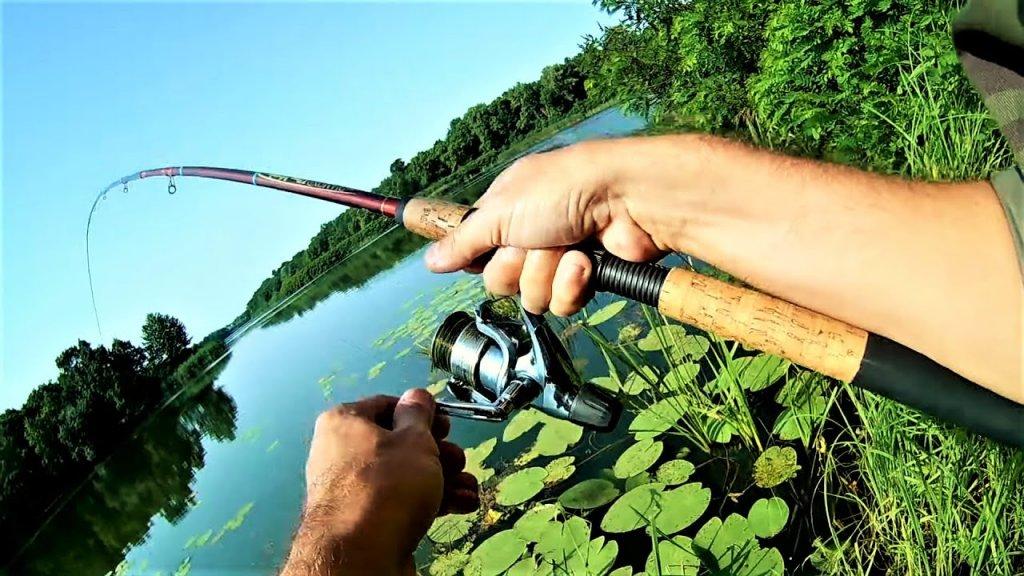 Где искать рыбу в жару  Ловля на матчевую снасть