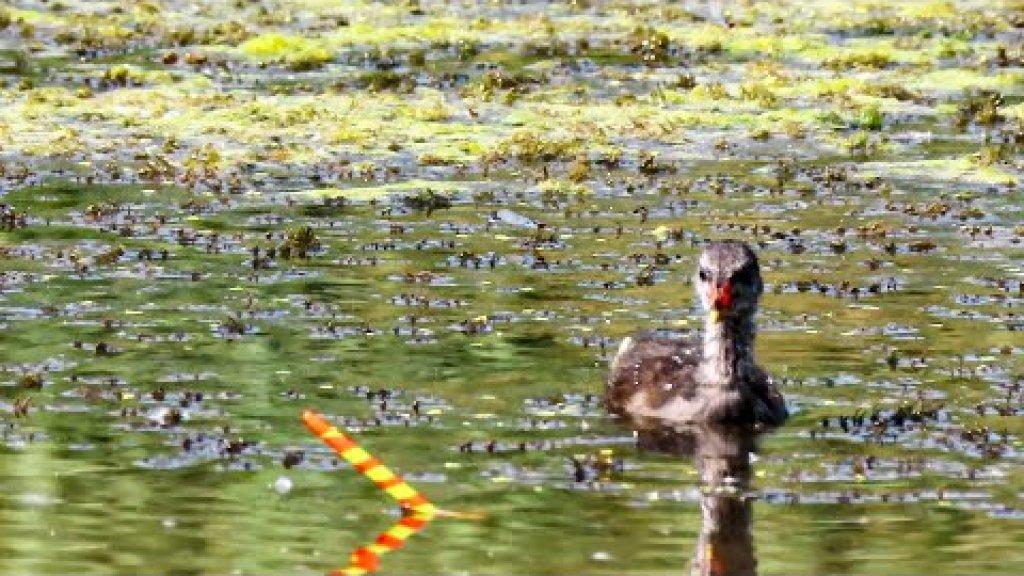 Карась на перо в микроречке /  рыбалка на поплавок летом в жару