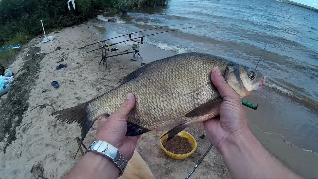 Сало vs опарыш. Рыбалка на водохранилище. Ловля леща на фидер и донки. Часть 1.